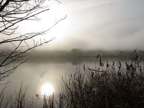 A foggy Deer Lake – New Year's Day, 2013